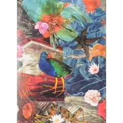 Takahe collage