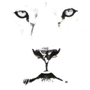 Curiosa pop: Liedjes over leeuwen